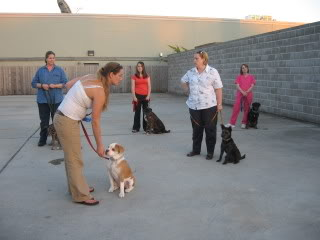 Training Tips: Pet Etiquette